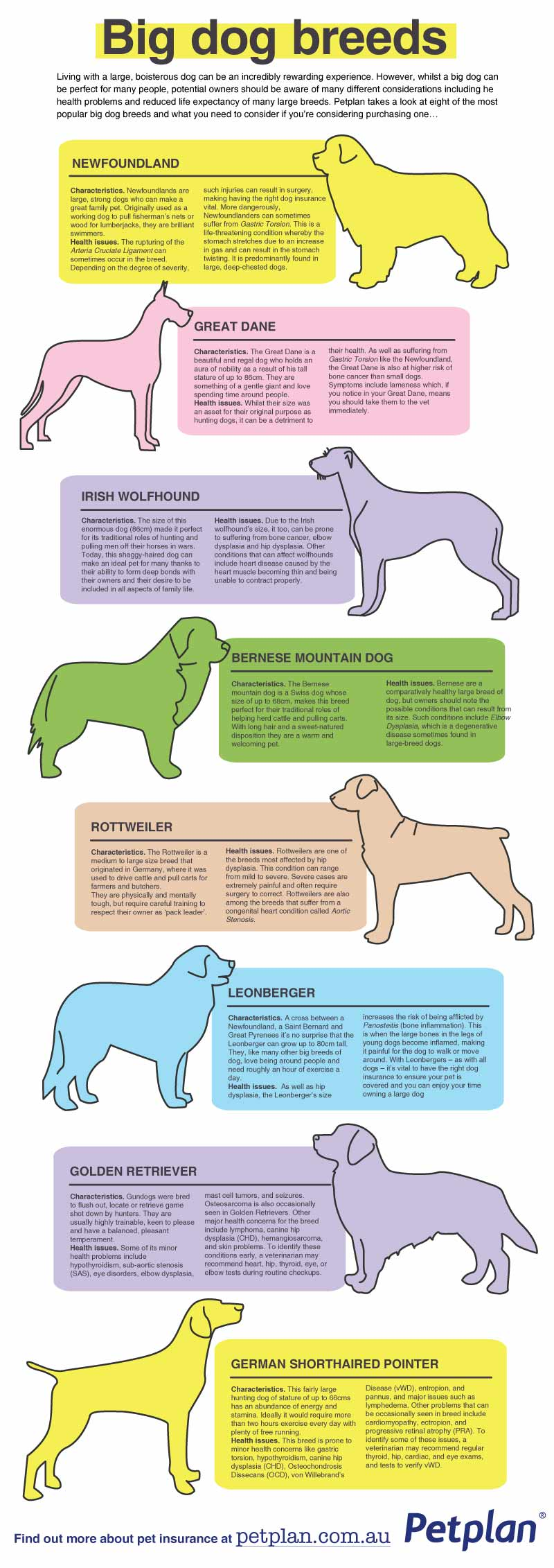 Big-Dog-Breeds