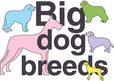 Big-Dog-Breeds-Thumbnail