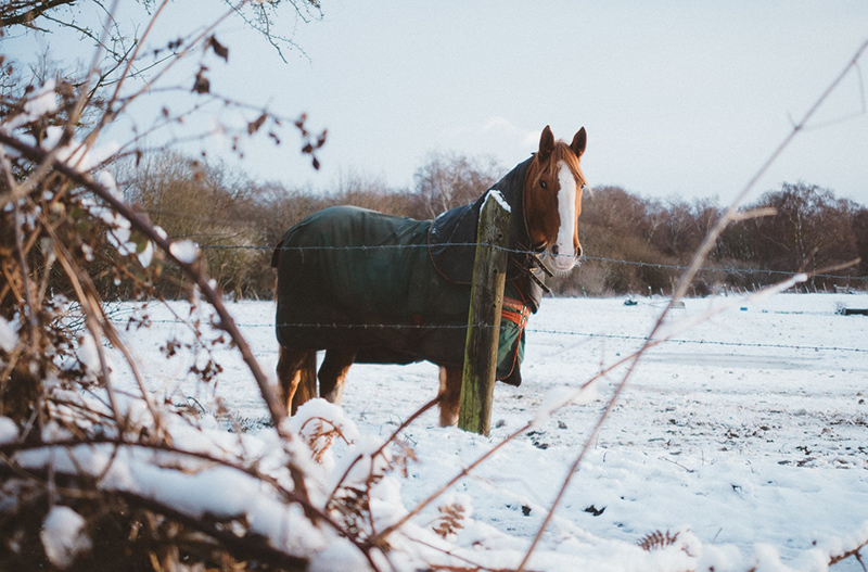cheval froid