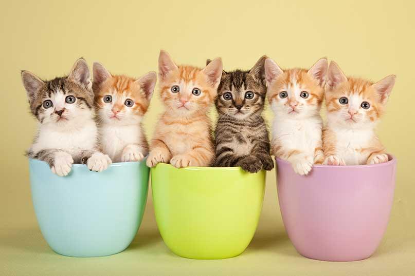 jumbo cat litter box with lid