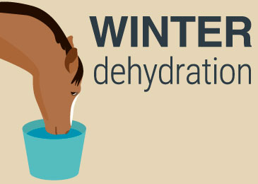 PPEQ-Infographic-Winter-Hydration-0717-Thumbnail