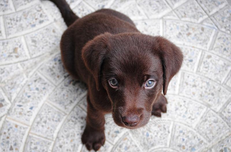 puppy toilet au