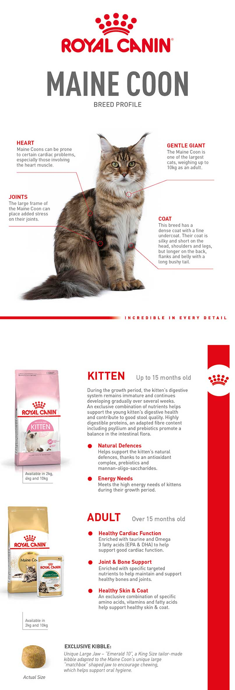 Maine Coon Breed Profile «