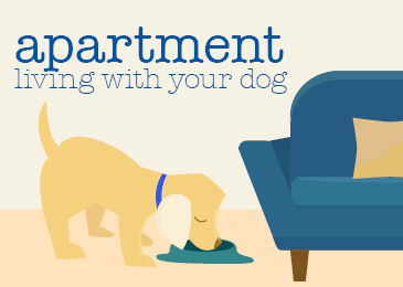 Dogs-and-apartment-life