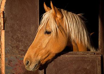 horse-eyes