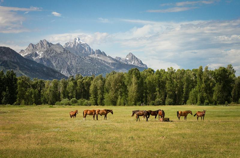 Horse Spring Pastures