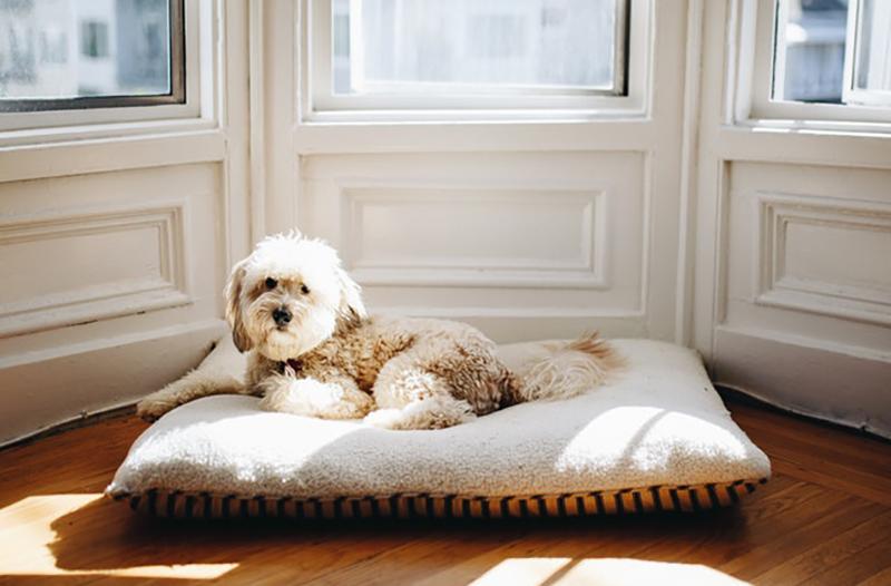 chien de l'appartement