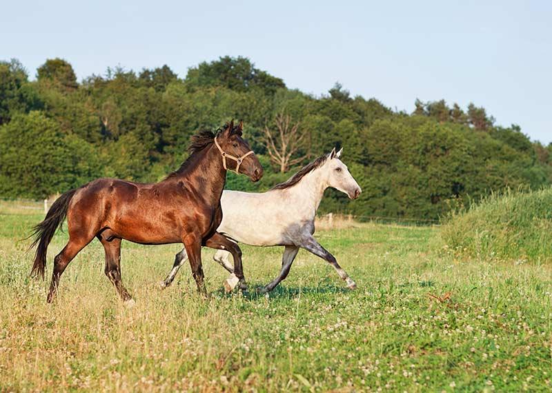 equine-health