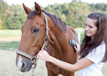 equine-grooming