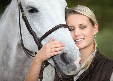 horse-care
