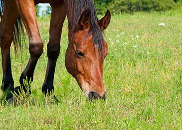 horse-insurance