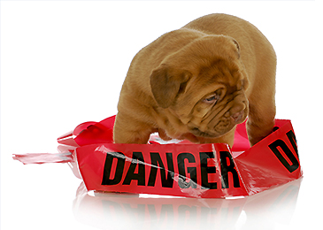 Dog_Danger_Warning_365_260