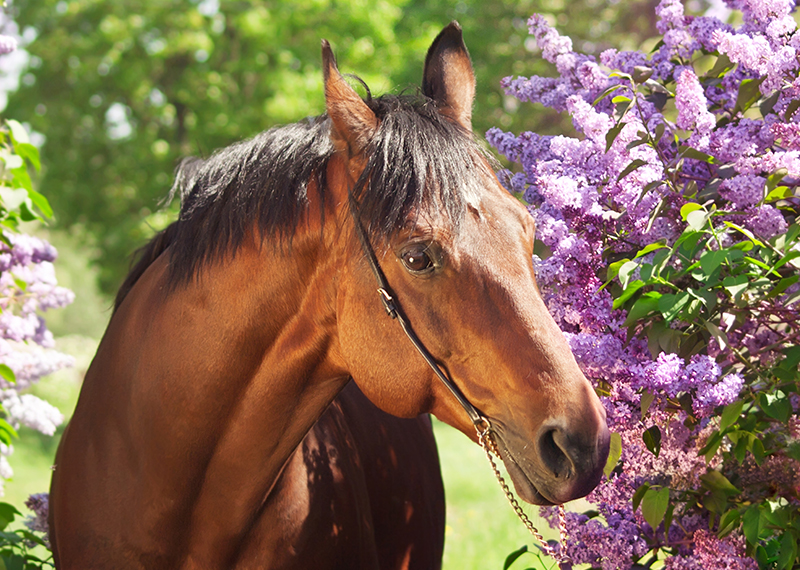 Horse_Flowers_800x527