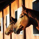 Horses_Barn_800x527