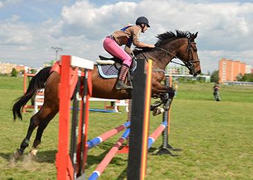 Horses_Jumping_365x260