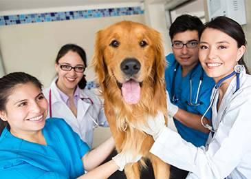 Veterinary_Staff_365x260