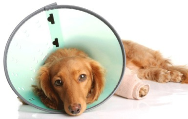 Vets-at-Home-Mobile-Specialist-Referrals