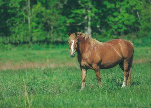 FAT HORSE MEDIA