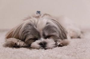 Pets Dreaming