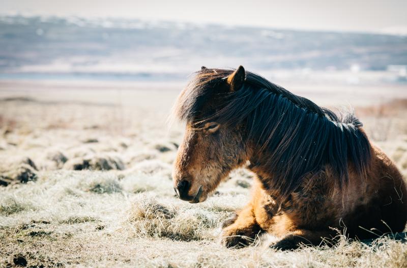 How Do Horses Sleep