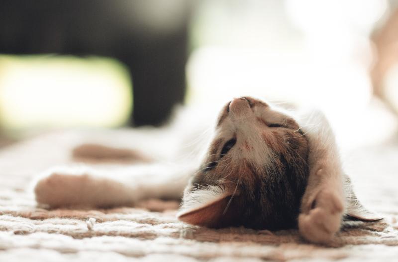Pet dreaming