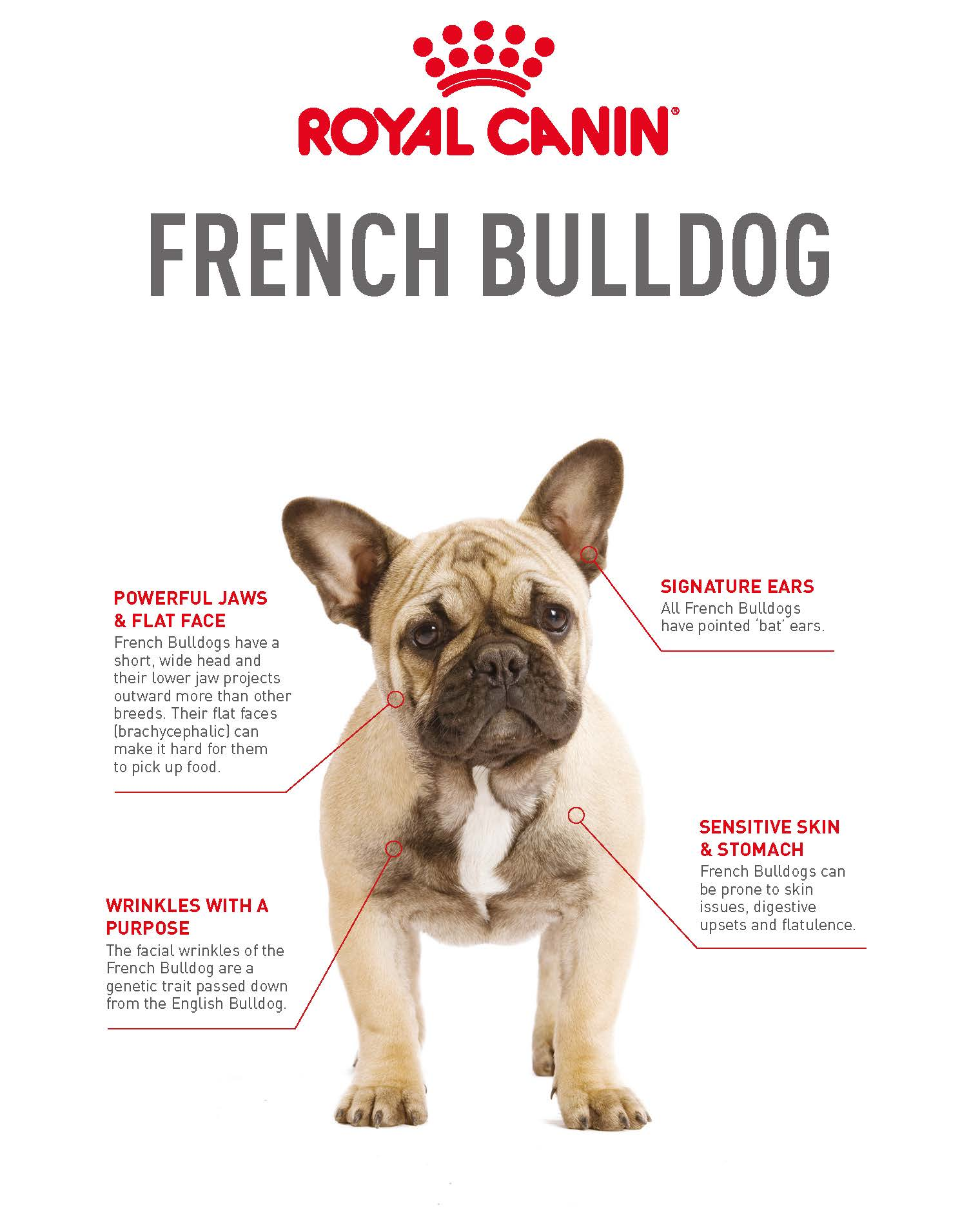 French Bulldog Breeder Profile