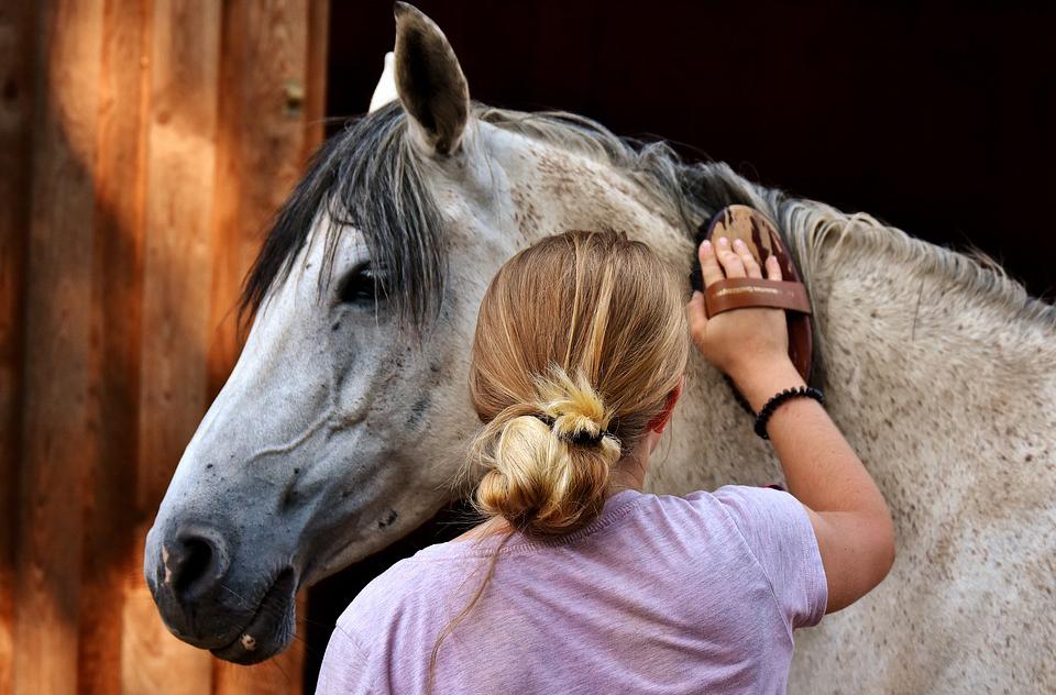 horse grooom