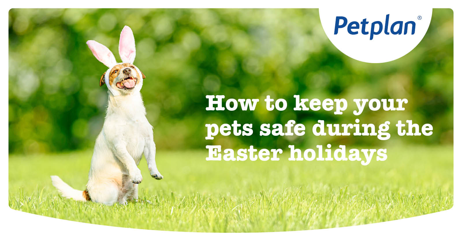 Petplan NZ - Pet safe Easter - OGI